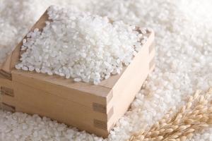 Công ty Senegal có nhu cầu nhập khẩu gạo tấm