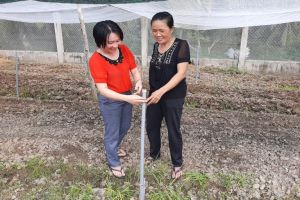 Khởi nghiệp từ trồng rau sạch an toàn