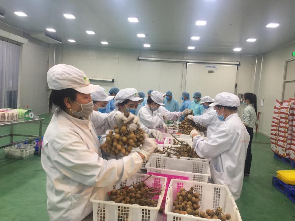 Giải pháp đẩy mạnh xuất khẩu nông sản Việt Nam nói chung và tỉnh Bến Tre nói riêng sang các nước EU khi Hiệp định EVFTA được ký kết
