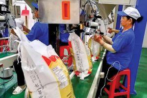 Trung Quốc tiếp tục tăng mua, gạo Việt bán được giá cao