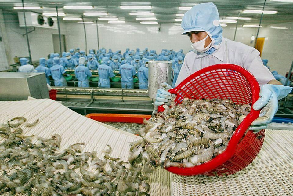 Tôm Việt Nam có nhiều cơ hội xuất khẩu hậu Covid-19
