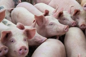 Diễn biến thị trường thịt gia súc, gia cầm trong nước tháng 7/2020
