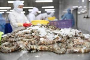 (vasep.com.vn) Tháng 8/2020, XK tôm Việt Nam đạt 394,6 triệu USD, tăng gần 12% so với tháng 8/2019. Lũy kế 8 tháng đầu năm nay, xuất khẩu tôm đạt 2,3 tỷ USD, tăng 8,4% so với cùng kỳ năm ngoái.