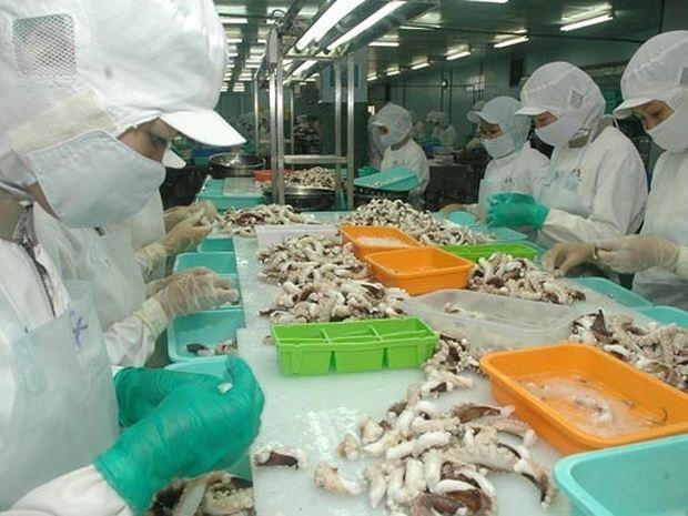 Tháng 7/2020: Xuất khẩu mực, bạch tuộc Việt Nam sang Trung Quốc vẫn ổn định