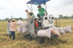 Với mặt hàng gạo, EU dành cho Việt Nam lượng hạn ngạch 80.000 tấn với thuế suất 0%.
