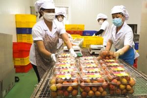 Thị trường Singapore: Cánh cửa đưa hàng Việt vươn mạnh ra thế giới
