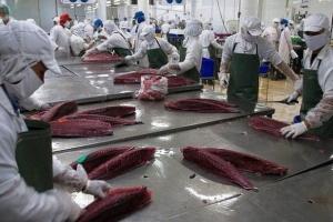 Xuất khẩu cá ngừ Việt Nam sang Mỹ tăng trở lại