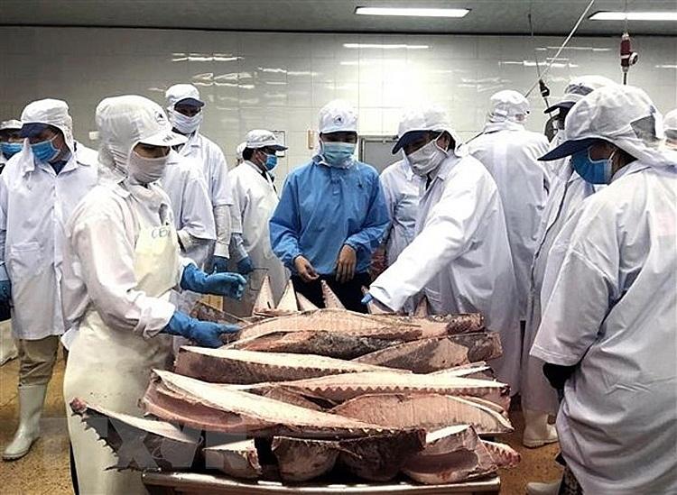 Khắc phục khó khăn để giữ thị trường xuất khẩu cá ngừ