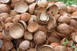 Tìm mua gáo dừa với số lượng nhiều thường xuyên