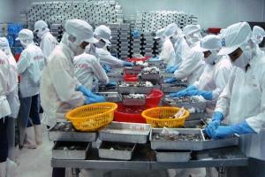 Tận dụng nhiều cơ hội để tăng trưởng xuất khẩu tôm