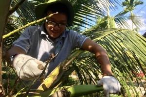 9x mang về thu nhập trên 30 triệu đồng/tháng từ mô hình mật hoa dừa