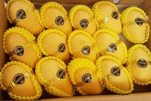 Hoa Kỳ tăng nhập khẩu xoài các loại từ Việt Nam