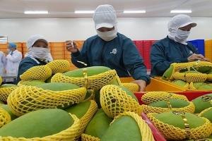 Xuất khẩu rau quả sang Trung Quốc tăng trưởng tích cực