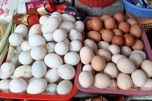 Nguồn cung trứng gia cầm còn rất nhiều, không lo thiếu hàng