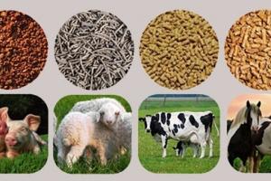 Công ty Hoa Kỳ cần tìm đối tác kinh doanh trong sản xuất thức ăn gia súc