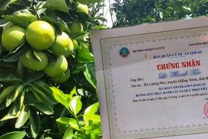 Bến Tre: Điểm sáng phát triển trái cây bền vững tại Đồng bằng sông Cửu Long