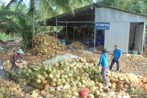 Hợp tác xã Nông nghiệp Thới Thạnh định hướng phát triển bền vững