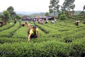 Thông tin giới thiệu một số sản phẩm  nông, thủy sản trên địa bàn tỉnh Lai Châu